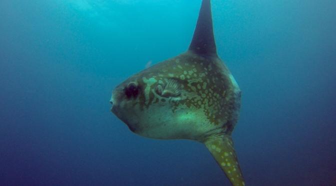 The Molas of  Nusa Penida