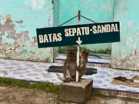 Baluran National Park, taman nasional, Bama Beach, monkeys, thieves, Java, Indonesia