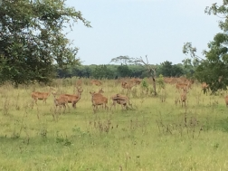 Baluran, national park, taman nasional, deer, Java, Indonesia