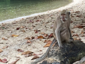 Some macaques like their days at the beach.