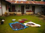 Spices drying in the front yard, Pulau Hatta