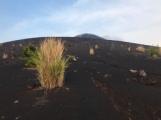 Pioneer grasses