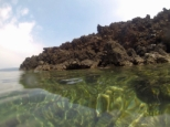 Snorkeling at the edge of the lava flow