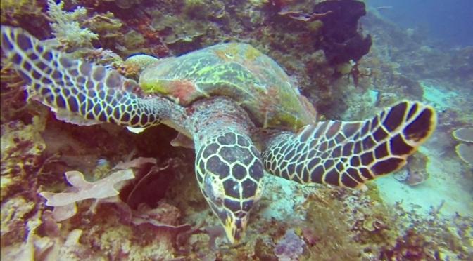 Raja Ampat:  The Holy Grail of Marine Diversity