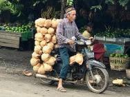 Mature coconuts