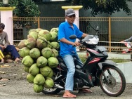 Green coconuts coming to market