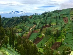 Agricultural terraces near Bromo