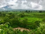 Rice terraces behind Ruteng